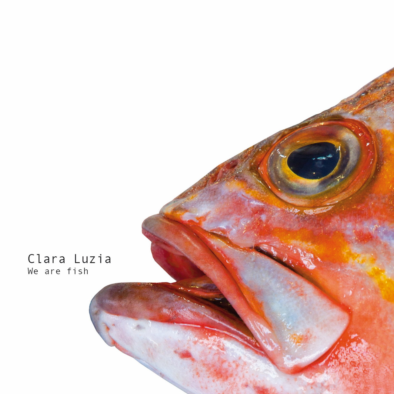 "Clara Luzia - ""We Are Fish"""