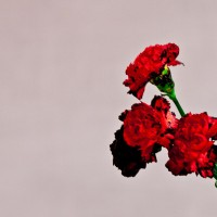 John_Legend_Album_Cover