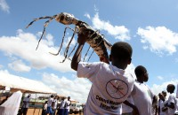 Children participate in a procession during a Mosquito field day ceremony in Kenya's town of Malindi, March 9, 2011.